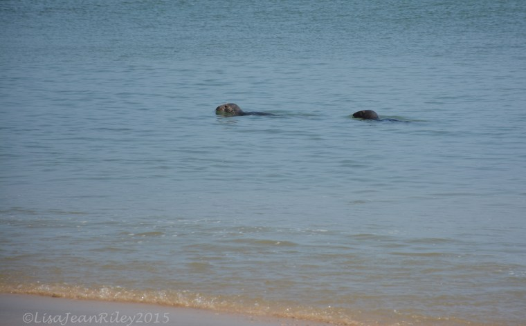 Marconi Seals