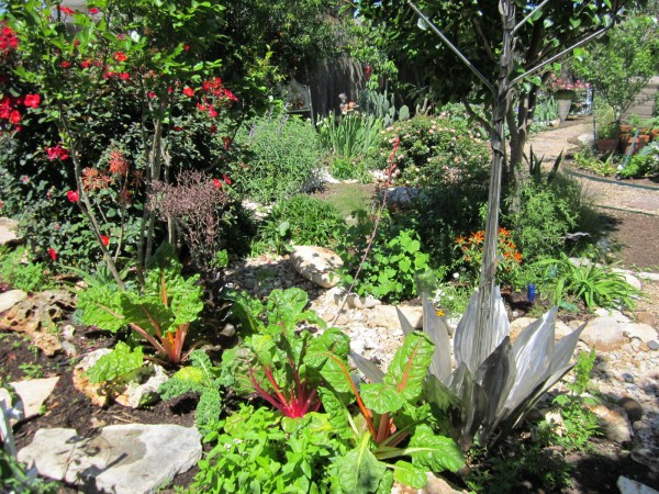 Creating exquisite Xeriscape and edible gardens that are oraganic, low maintenance and low water.