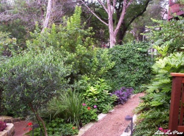 Lush Xeriscape garden adding interest with texture and contrasting color.
