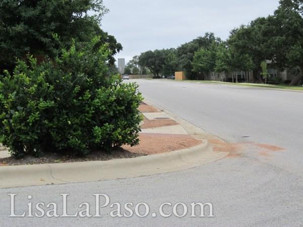 shrub at stop sign