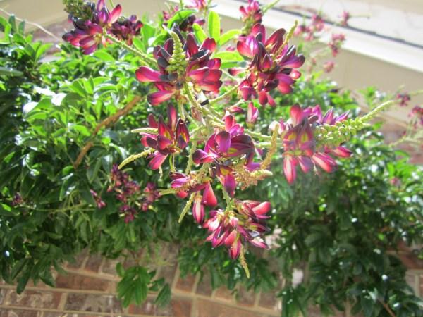 Spectacular Bloom!