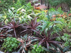 I love this shot, it is a great view from the top of the hill to the seating area below. I have used a combination of TX perennials with seasonal annuals to make a statement of color with leaves in a really dark space.