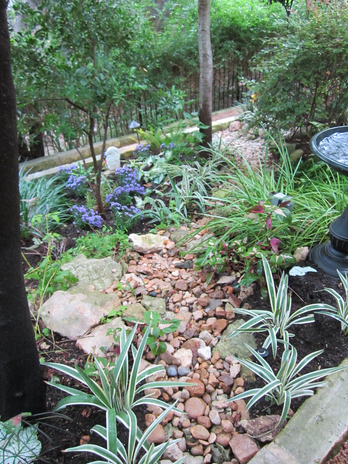 Shade Plants for Central Texas | Lisa's Landscape & Design on Shade Ideas For Backyard id=29247