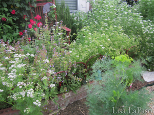 Herbs are an a great addition to the moonlit garden both for fragrance and aesthetics, not to mention they are delicious!