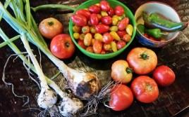 Garden vegetables, lisa lapaso