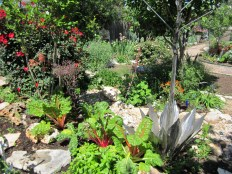 Creating exquisite Xeriscape and edible gardens that are organic, low maintenance and low water. There is no place for chemicals here.