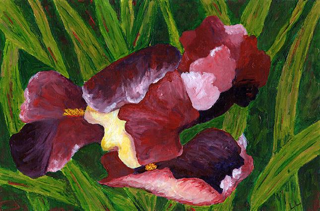 TIP 002: Wine Colored Iris