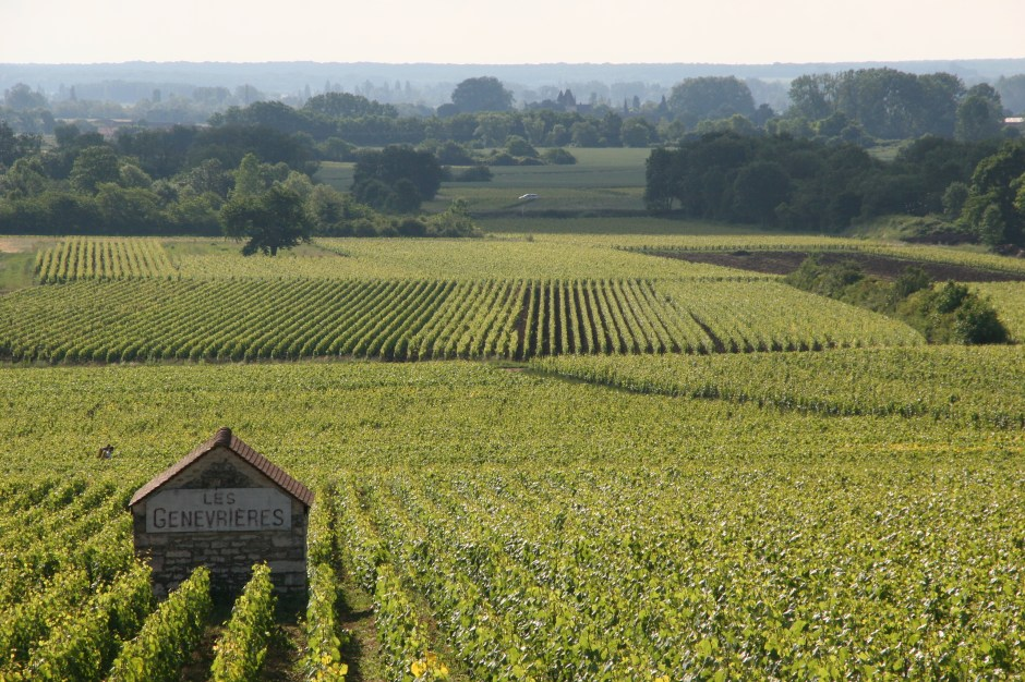 Genevrieres Vineyards, Meursault, Burgundy, France