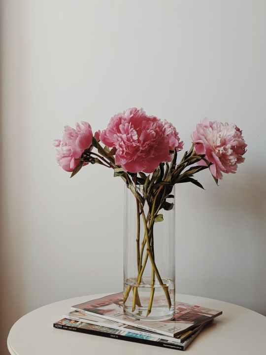three pink carnations in vase