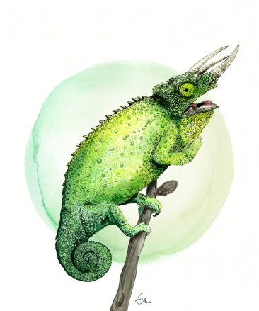 """Chameleon illustration """"Green Eye"""" by Lisa Mona, available on www.art-aid.at"""