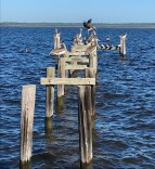 Before: Pelicans in Cedar Point