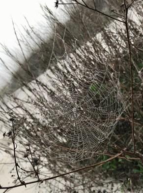 Beach spiderweb 1