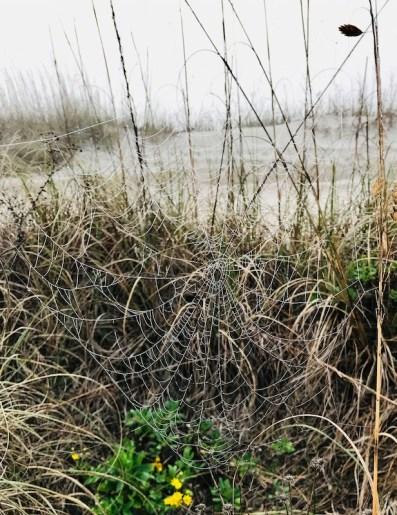 Beach spiderweb 2