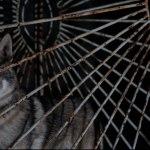 the_Aesthetics_of_heritage_Kosice_White_Night_Lisa_Premke_closeup_Wolf_Choir