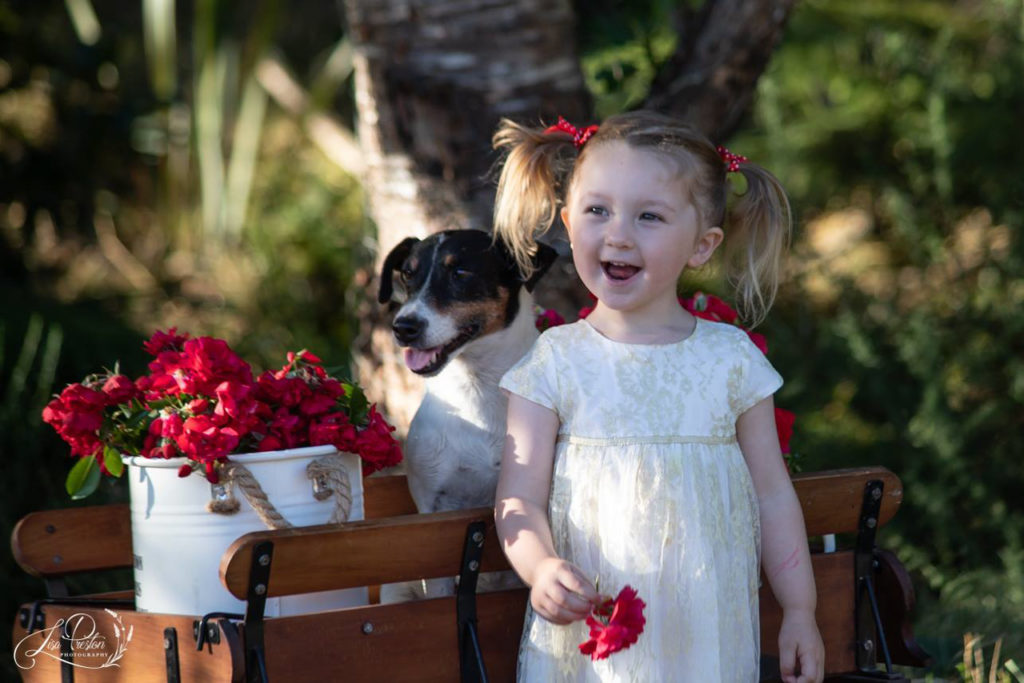Red rose wagon, valentines day pet, toddler portrait