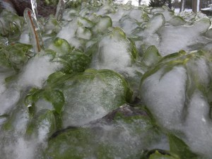 Don't be a victim of Freeze on Plant Violence! Photo Credit:  Chad Cooper via Flickr