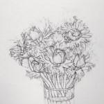 Anemones Drawing