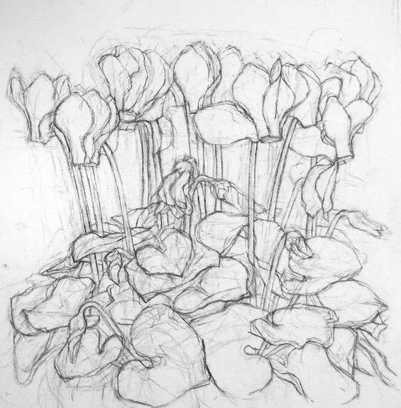 Cyclamen Drawing Charcoal