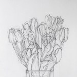 Tulips Drawing