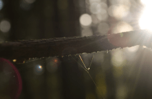 Fotosafari_spindelvev_sol