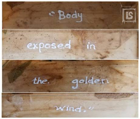 Coyote and the Golden Wind: A Koan around the edges of panel
