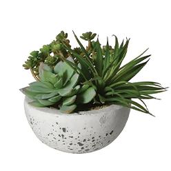 Adeline-Molloy-Design---Succulents-in-Cement-bowl