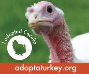 2014-Adopted-Turkeys-472x394-Cecelia