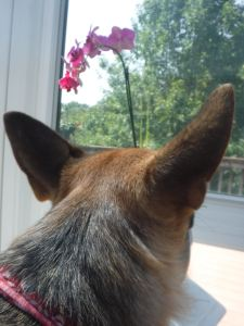 missy looking out