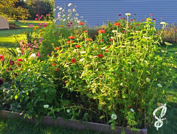 How To Plan And Plant A Cutting Flower Garden Part I Planning