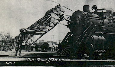 Grasshoppers warming themselves on railroad tracks did stop trains but not exactly like this.