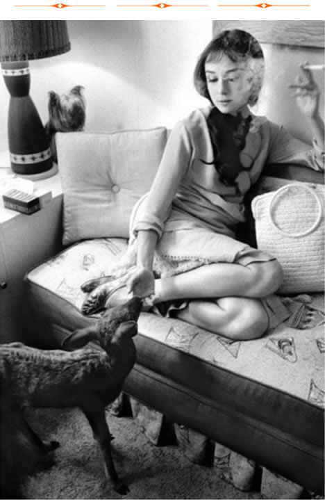"""Audrey Hepburn in her dressing room during the filming of """"Green Mansions."""" She is feeding Ip the fawn while her Yorkshire terrier Mr. Famous looks on from the left."""