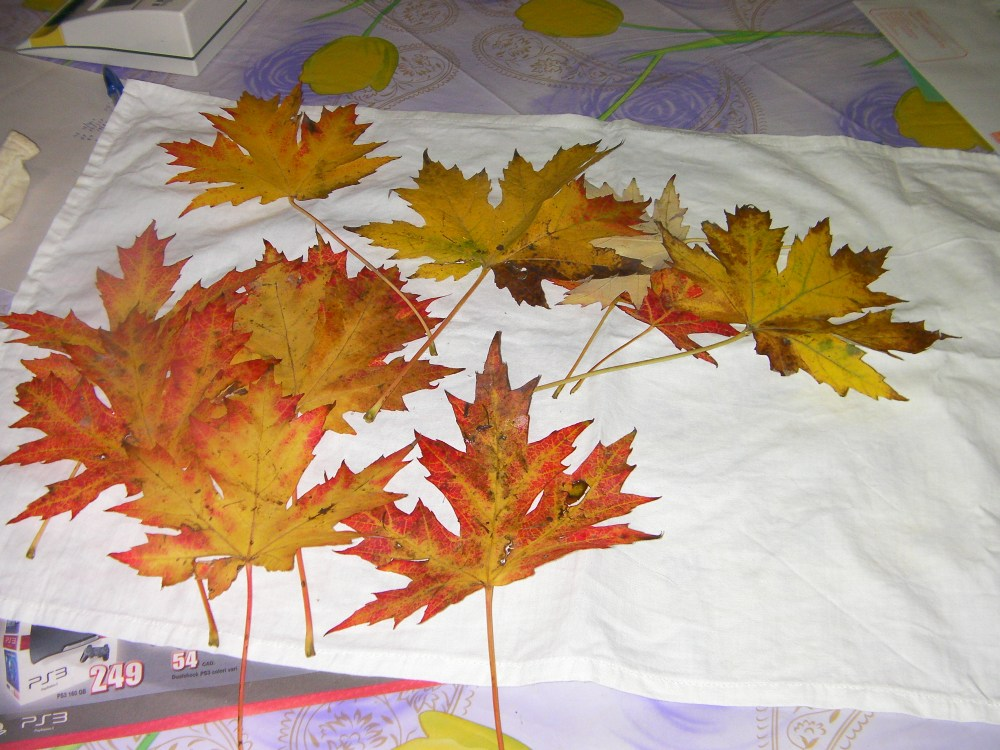 autunno: con le foglie...rose fai da te   (2/6)