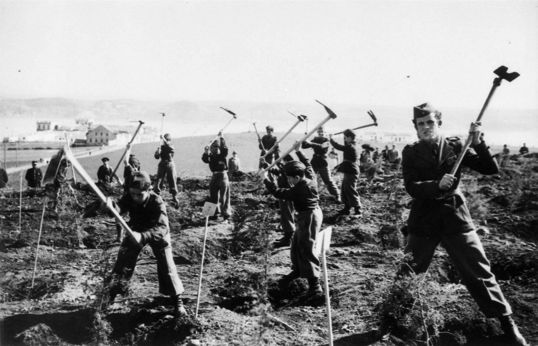 Boisement Monsanto