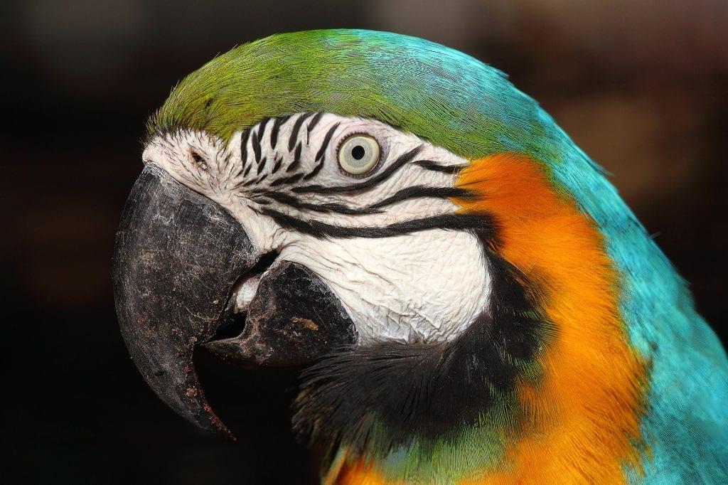 Lisbon Zoo Parrot