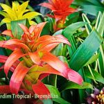 Jardim Botânico Tropical