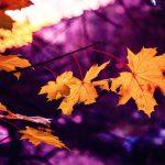 Efterårs inspiration