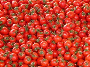 tuinbouw voor dummies zo worden tomaten gekweekt in het westland