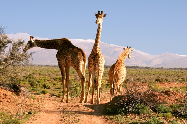 landen die ik nog wil bezoeken Zuid-Afrika Lisette Schrijft