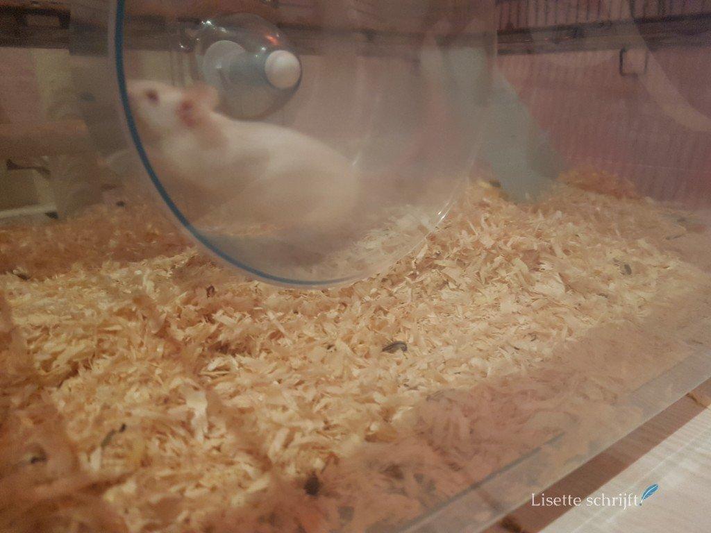 moeder muis rent in haar rad