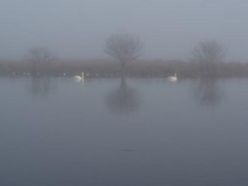 Willeskop mist