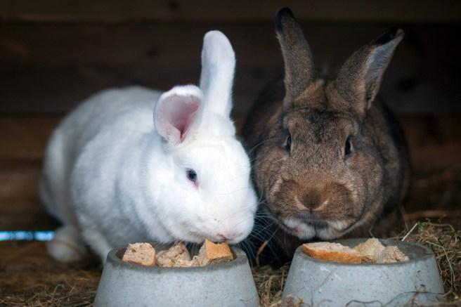 Lovelace II og Holmes II. Foto: Lise von Krogh ©