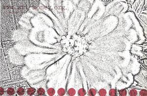 am-m-blomst.jpg