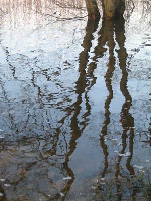 oernsoe-spejling.jpg