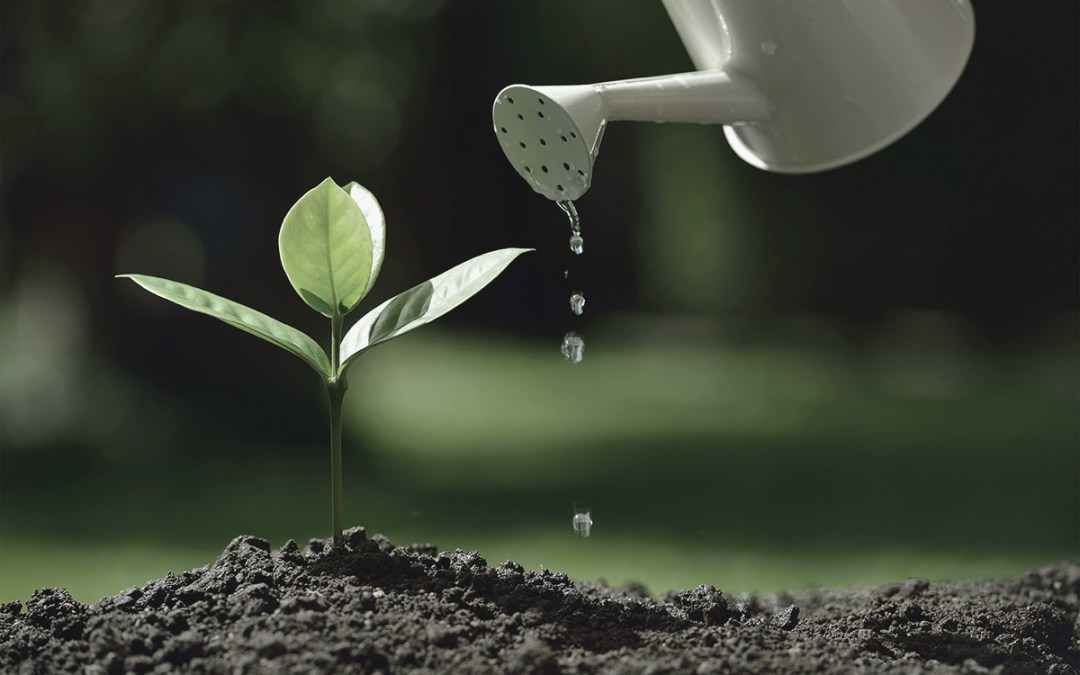 Planting Seeds with Your Brand's DNA