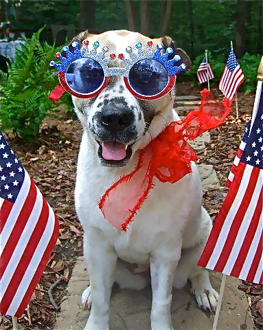 So fetching in Red, White and Blue–Happy Fourth of July