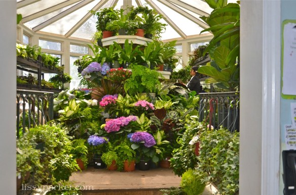 The conservatory is packed to the ceiling with treasures