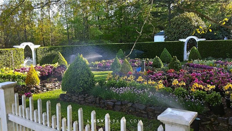 Sprinklers watering a boxwood edged flower garden