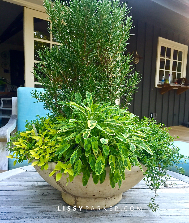 container garden of herbs