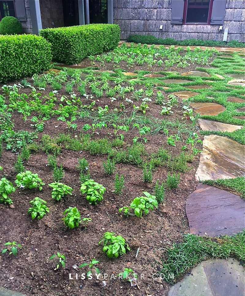 herb garden in boxwood hedge