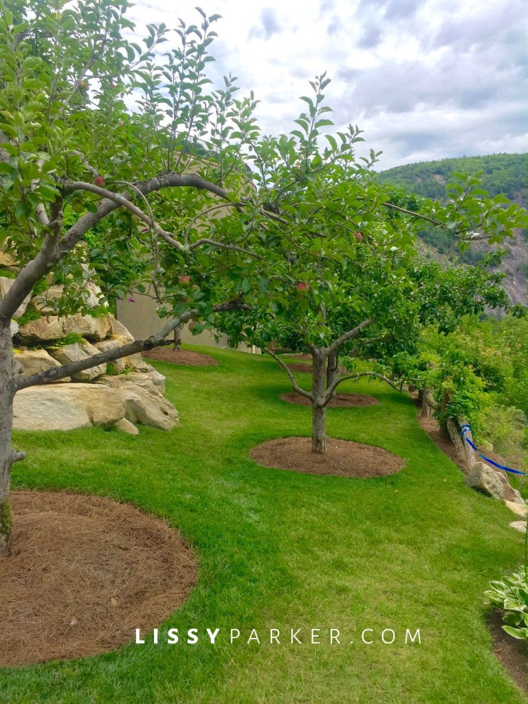 apple trees and a mountain view.